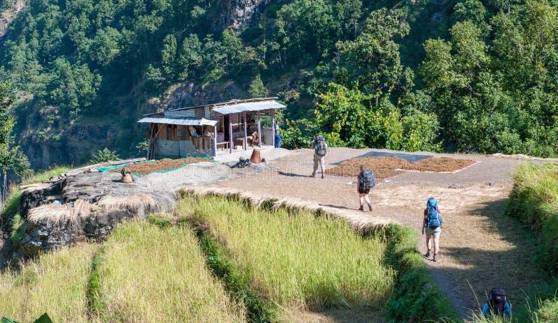 Un gruppo di trekkers cammina sulla traccia polverosa lungo il lato un terrazzo del riso che sfocia in una valle himalayana Vita  immagine stock