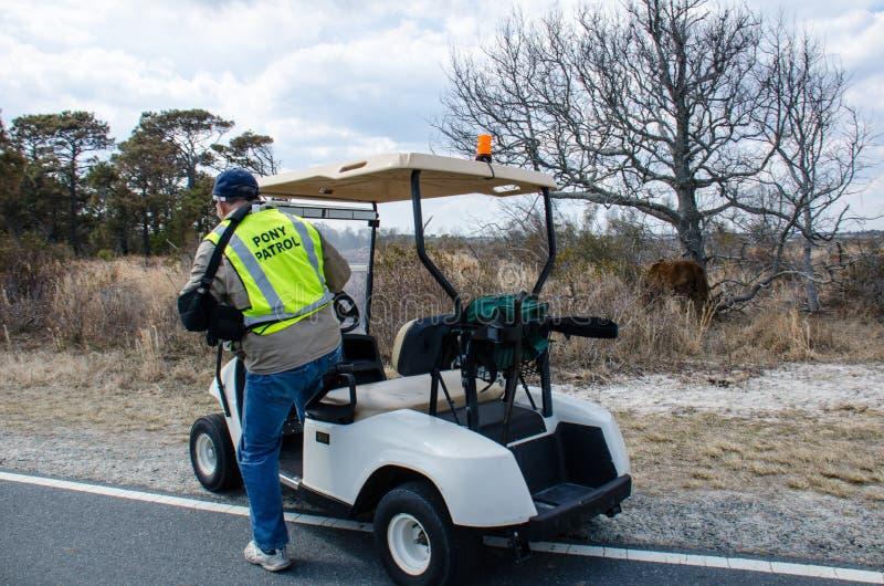 Un guarda del parque de la patrulla del potro en costa nacional de la isla de Assateague reúne los caballos salvajes imágenes de archivo libres de regalías