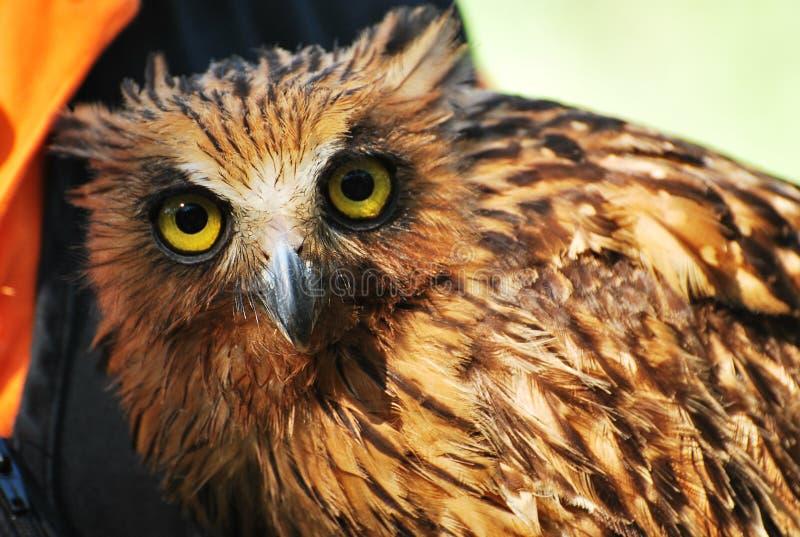 Download Un gufo fotografia stock. Immagine di aviary, gabbia - 27329580