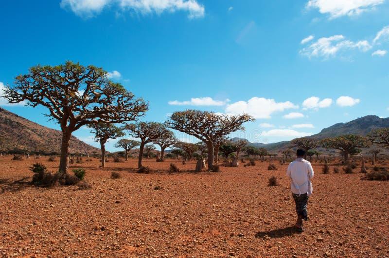 Un guide yéménite dans la forêt de Dragon Blood Trees dans le plateau de Homhil, île de Socotra, Yémen image stock