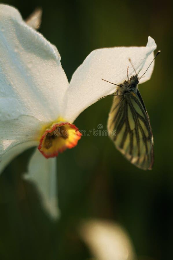 Un guindineau est sur une fleur image libre de droits