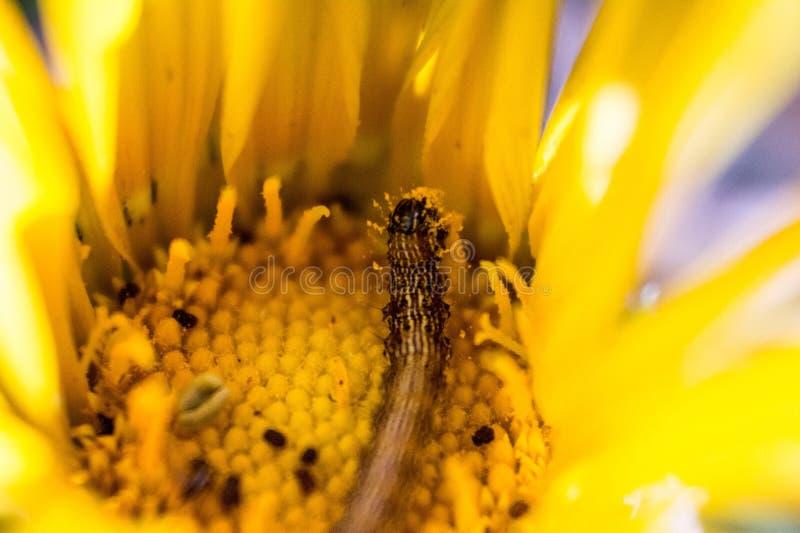 Un gusano en una flor fotos de archivo