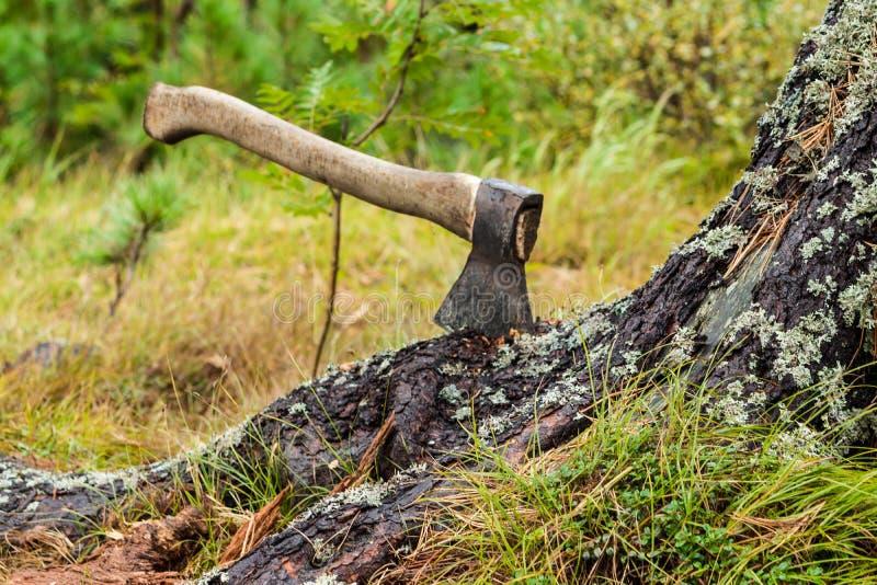 Un hacha pegada en un árbol fotos de archivo libres de regalías