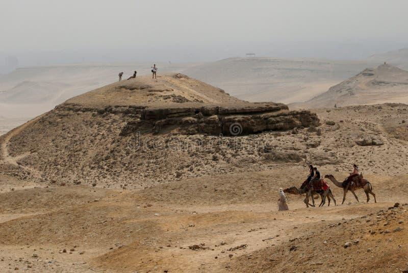 Un hombre árabe lleva camellos a través del desierto La meseta de Giza T fotografía de archivo