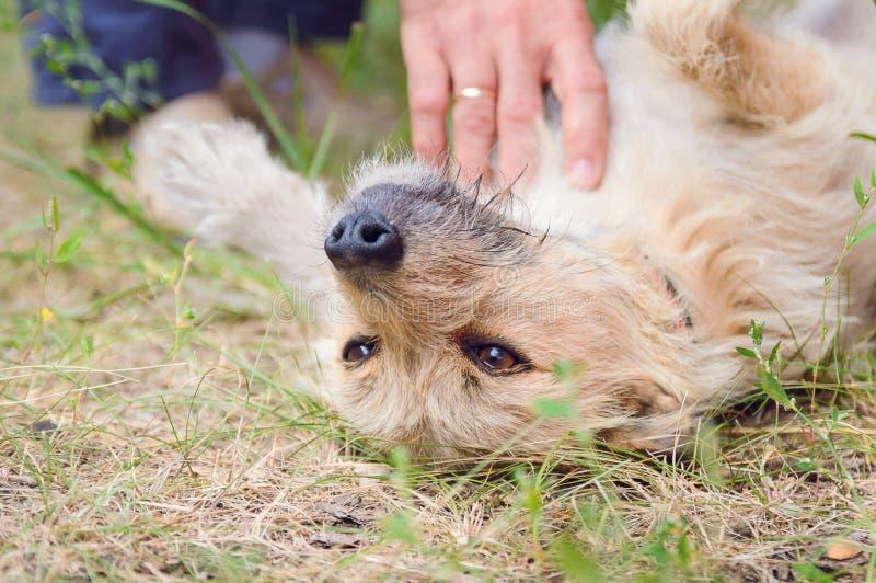 Un hombre acaricia su perro imagenes de archivo