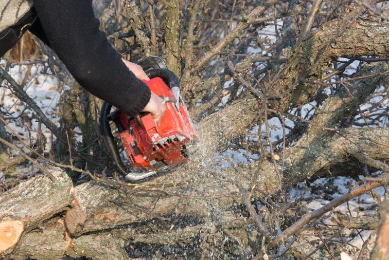 Un hombre corta un tronco de la motosierra y ramas de un árbol fotografía de archivo