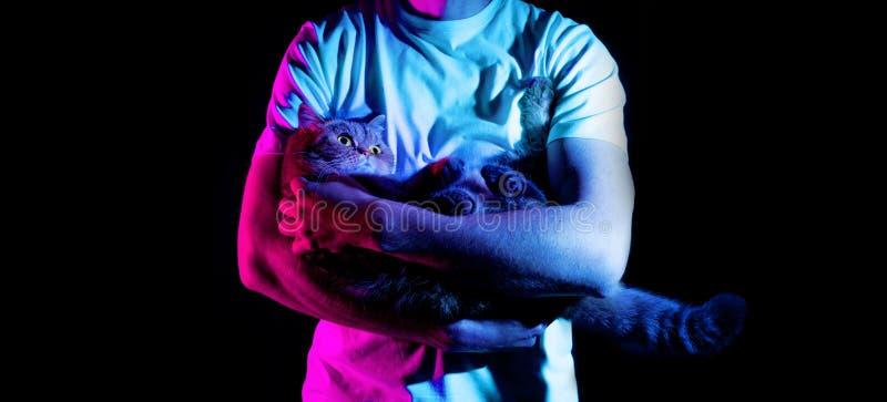 Un hombre está sosteniendo su gato nacional en sus manos en un fondo negro, en la luz de neón imagen de archivo libre de regalías