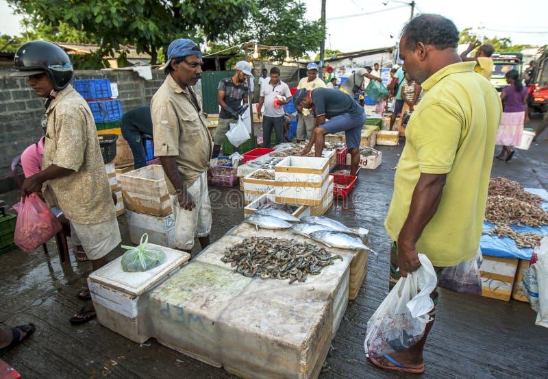 Un hombre examina una pila de gambas para la venta fuera del mercado de pescados de Negombo en Negombo en Sri Lanka imagen de archivo
