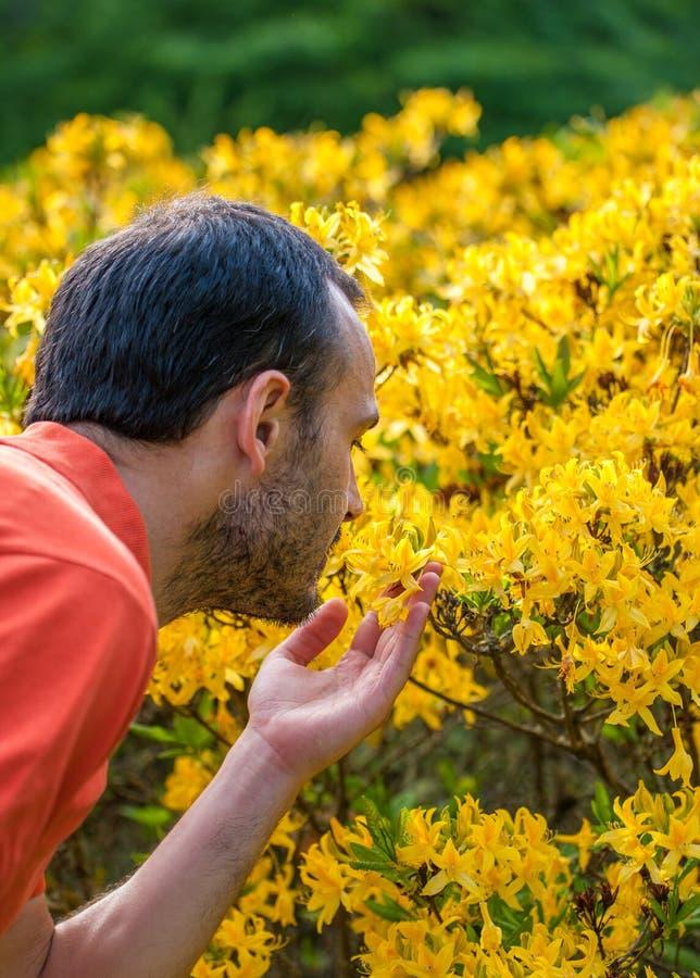 Un hombre joven que disfruta del aroma del flor de la primavera del yello brillante fotos de archivo libres de regalías