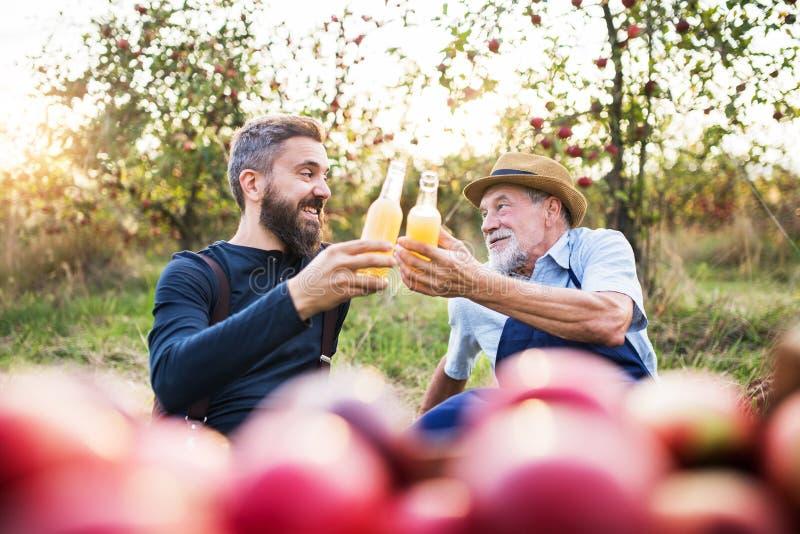 Un hombre mayor con el hijo adulto que sostiene las botellas con sidra en manzanar en otoño imagen de archivo libre de regalías