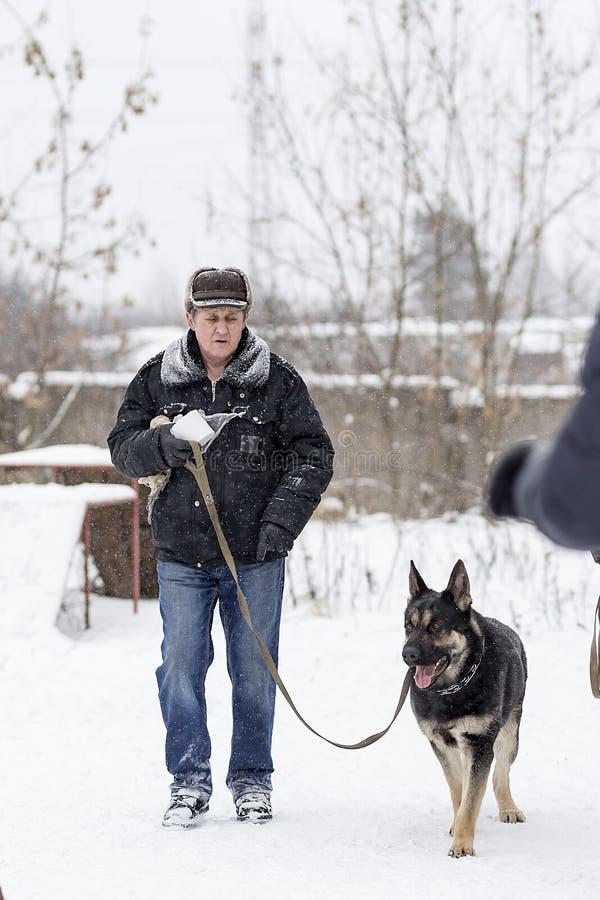 Un hombre mayor que camina con un pastor alemán en el invierno imagen de archivo