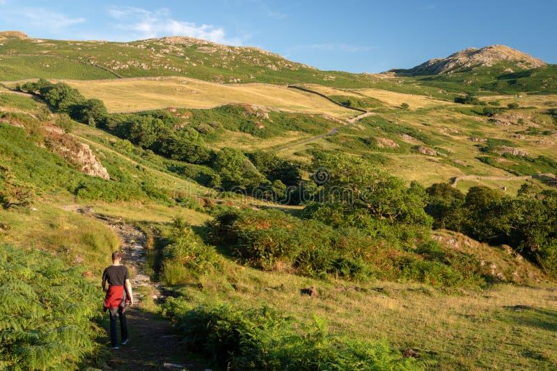 Un hombre que camina en campo inglés hermoso en el valle de Duddon fotos de archivo