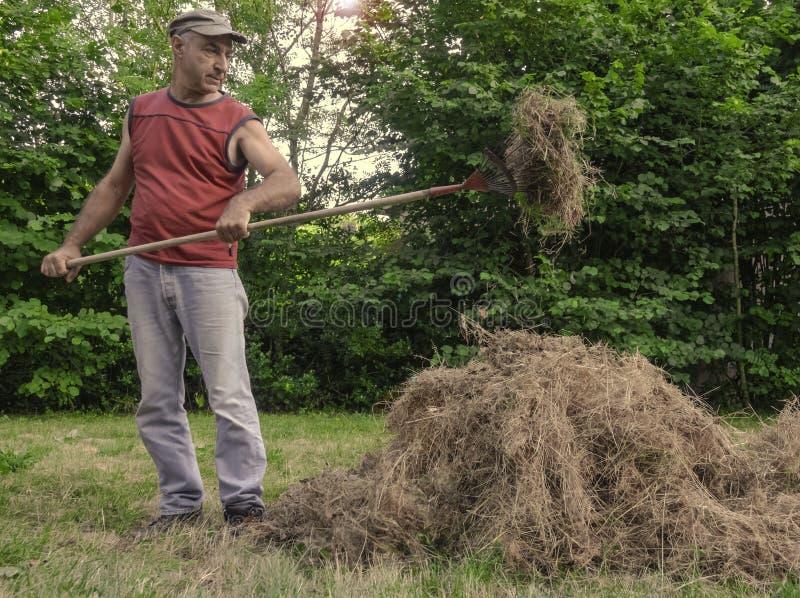 Un hombre recoge la hierba seca con los bieldos fotos de archivo