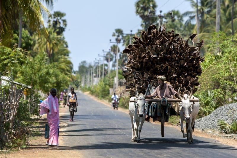 Un hombre y su carro de los bueyes en Sri Lanka imágenes de archivo libres de regalías