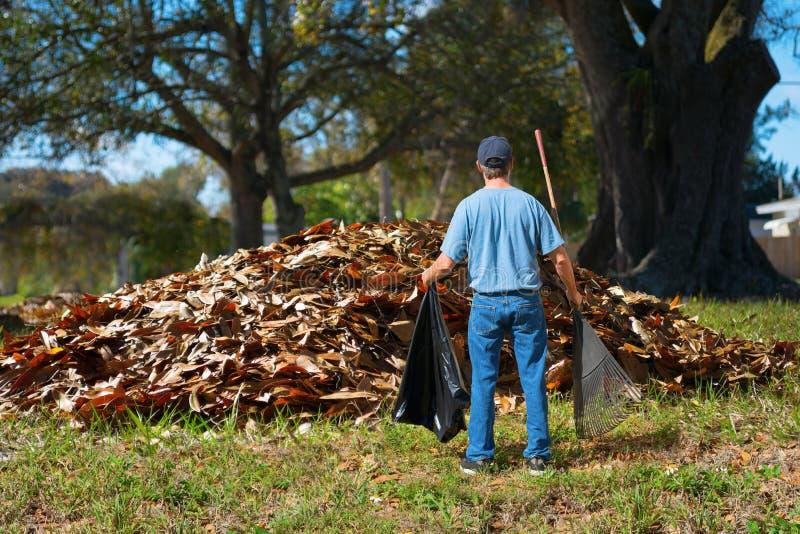 Un homme affolé avec un sac de râteau et de déchets dans des ses mains se tient devant une pile géante des feuilles photo libre de droits