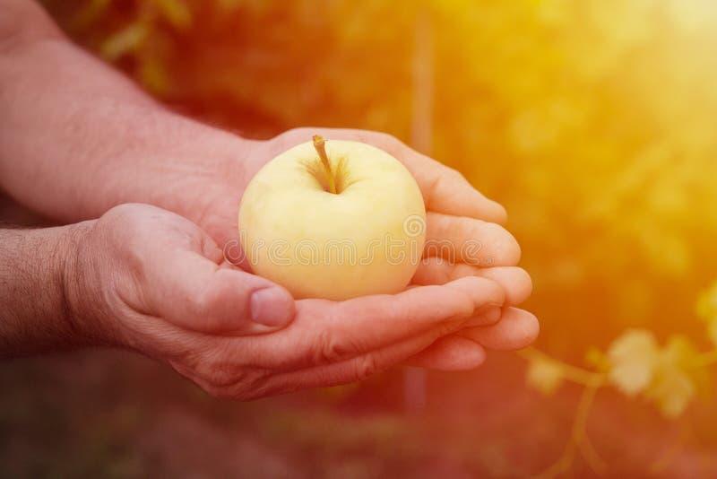 Un homme-agriculteur tenant une pomme lumineuse et juteuse dans des ses mains dans le r images stock
