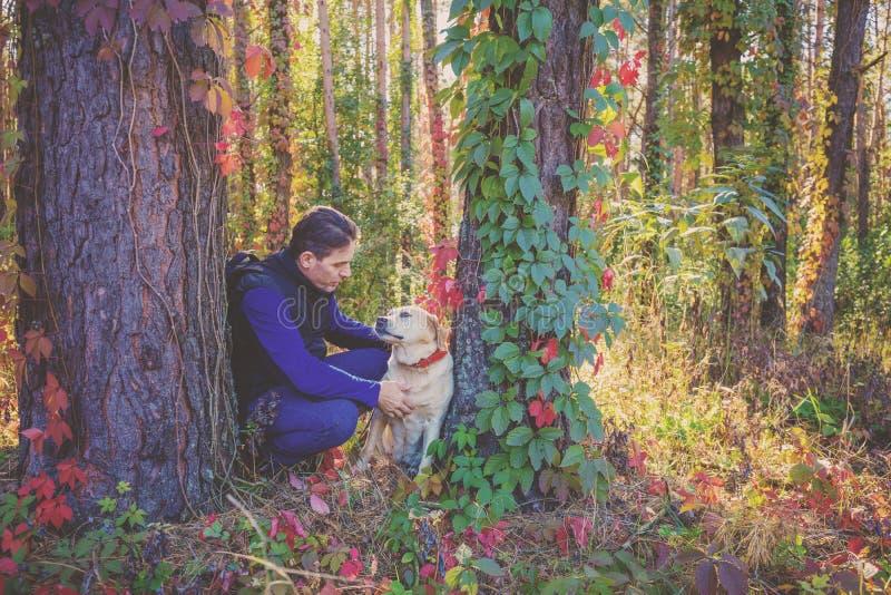 Un homme avec le chien de labrador retriever marchant dans la forêt photos libres de droits