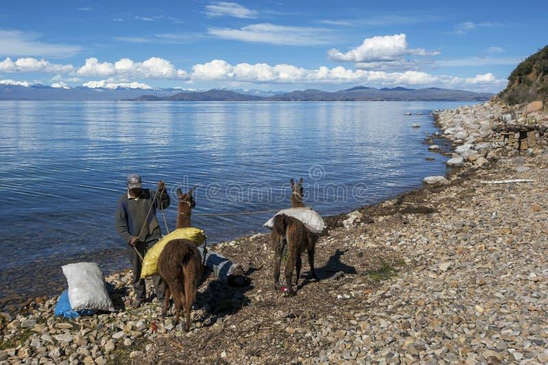 Un homme de Bolivien charge des sacs sur ses paires de lamas photos stock