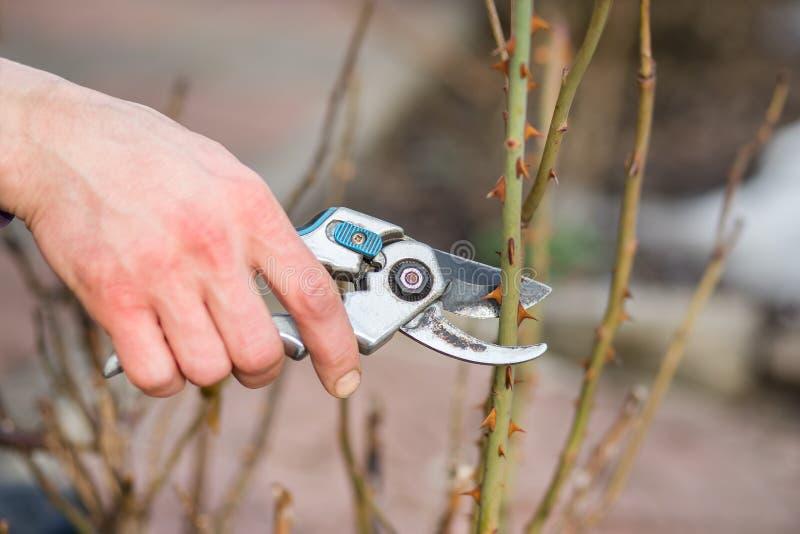 Un homme de jardinier coupe des branches des buissons et des arbres dans son jardin photo stock