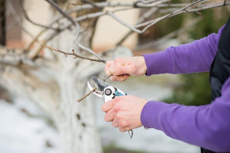 Un homme de jardinier coupe des branches des buissons et des arbres dans son jardin photos libres de droits