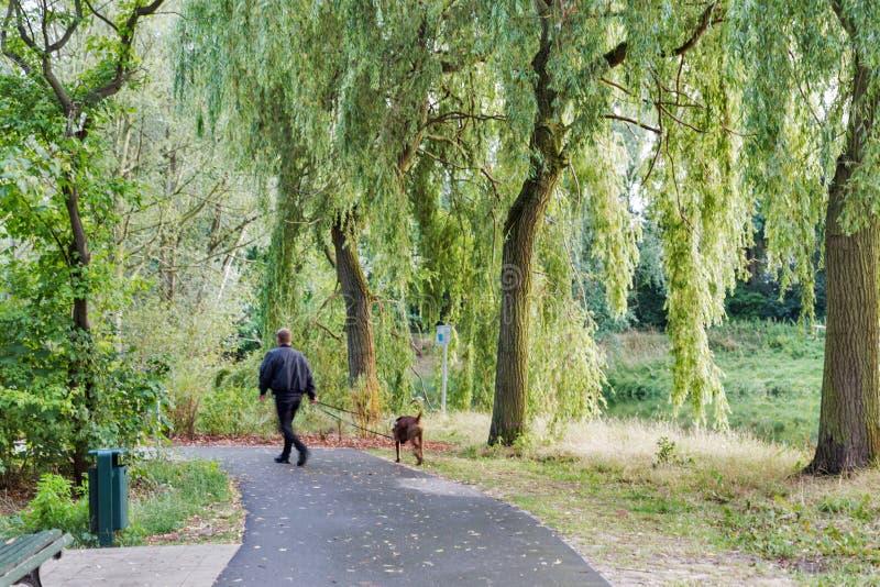 Un homme marche un chien en parc, brouillé photos stock