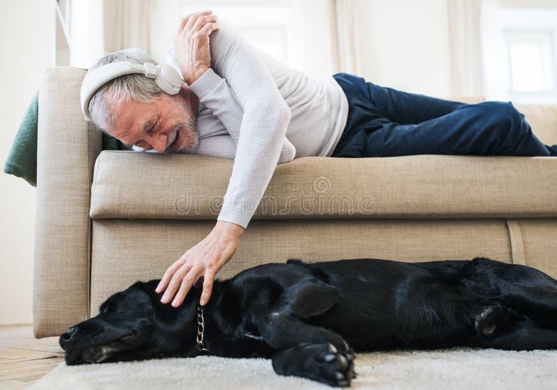 Un homme supérieur heureux se trouvant sur un sofa à l'intérieur avec un chien à la maison, écoutant la musique image stock