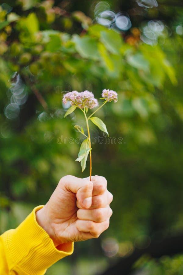 Un homme tient une fleur sur le fond brouillé des arbres et de l'herbe bokeh, plan rapproché, pique-nique, été images stock
