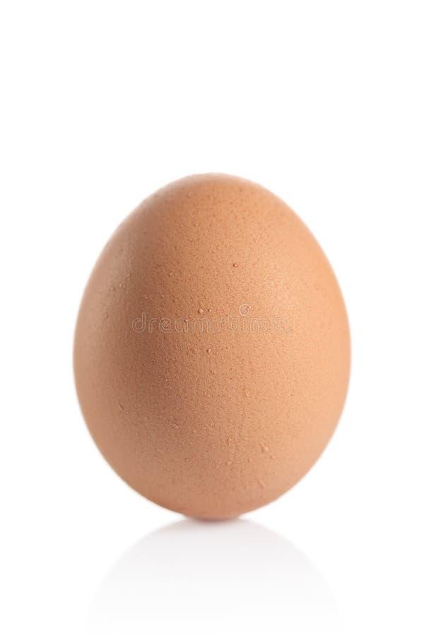 Un huevo animal foto de archivo