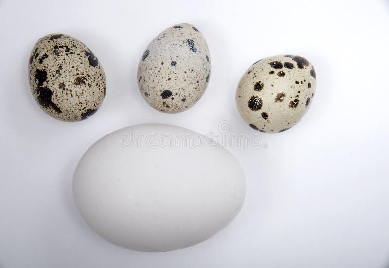 Un huevo blanco grande y tres pequeños huevos de codornices beige imágenes de archivo libres de regalías