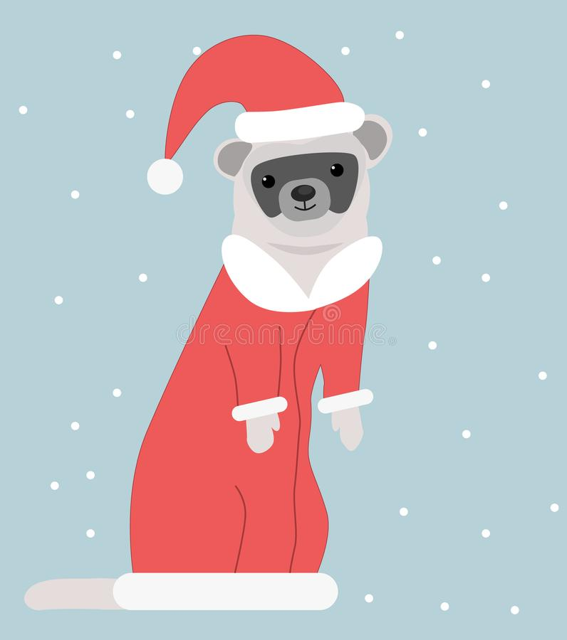Un hurón en un traje del ` s del Año Nuevo imágenes de archivo libres de regalías