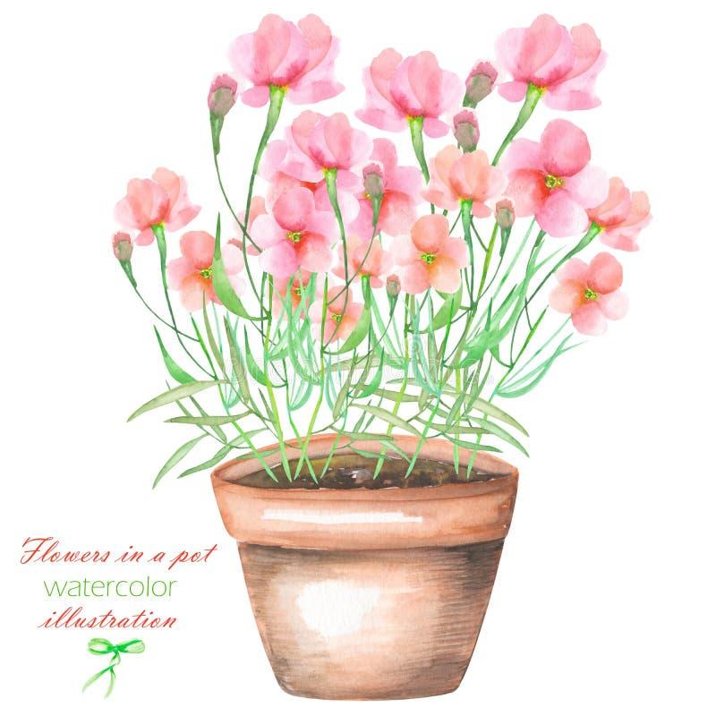 Un'illustrazione con il rosa dell'acquerello fiorisce in un vaso illustrazione vettoriale