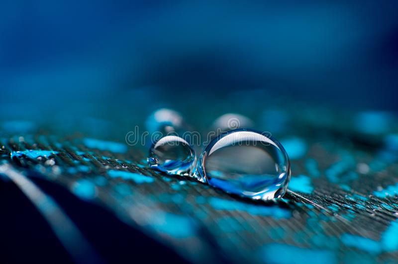 Un'immagine astratta delle piume lanuginose di colore blu con goccia di rugiada dell'acqua di due macro, bello sfondo naturale immagine stock libera da diritti