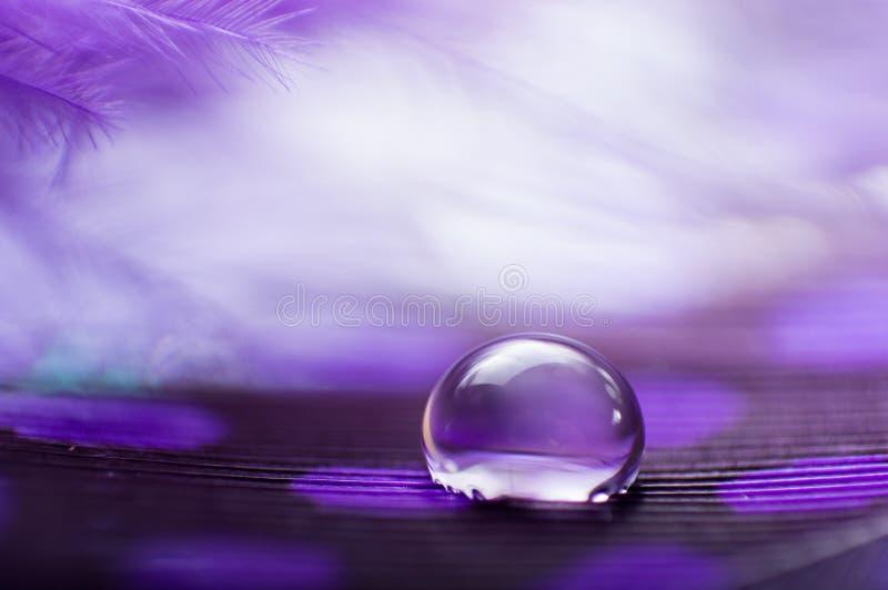 Un'immagine astratta delle piume lanuginose di colore porpora con una macro goccia di rugiada dell'acqua, bello sfondo naturale immagine stock