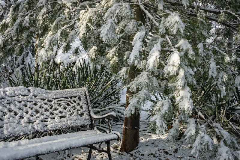 Un'immagine calma di un giardino innevato di inverno C'è un banco del giardino coperto di neve lanuginosa bianca immagini stock