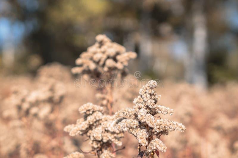 Un'immagine del primo piano di una pianta marrone con un fondo confuso marrone caduta, natura, scena, fondo, d'annata, lunatico; fotografia stock