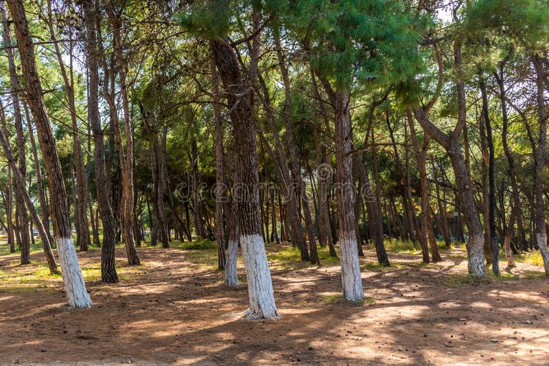 Un'immagine della foresta in Chania Creta immagine stock
