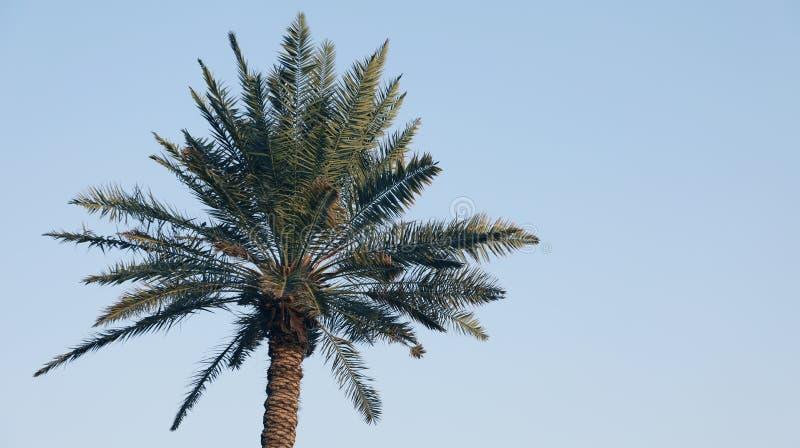 Un'immagine della palma piacevole fotografia stock