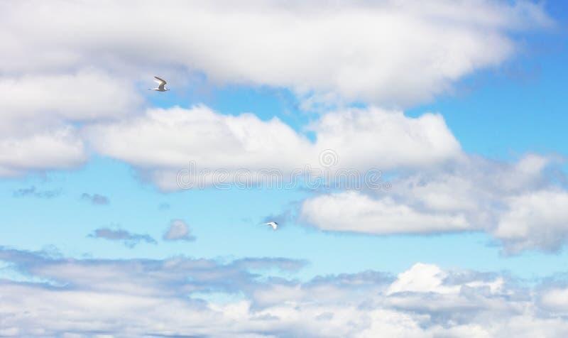 Un'immagine di sfondo di due uccelli che pilotano aginst un cloudscape blu e bianco immagini stock
