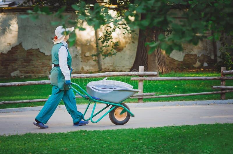 Un impiegato di un parco della città sta portando un carretto con un tubo flessibile per l'innaffiatura delle piante Ogni mattina immagini stock