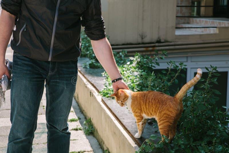Un individuo joven, turista, un viajero acaricia un gato blanco rojo encantador Estambul, Turquía imagenes de archivo