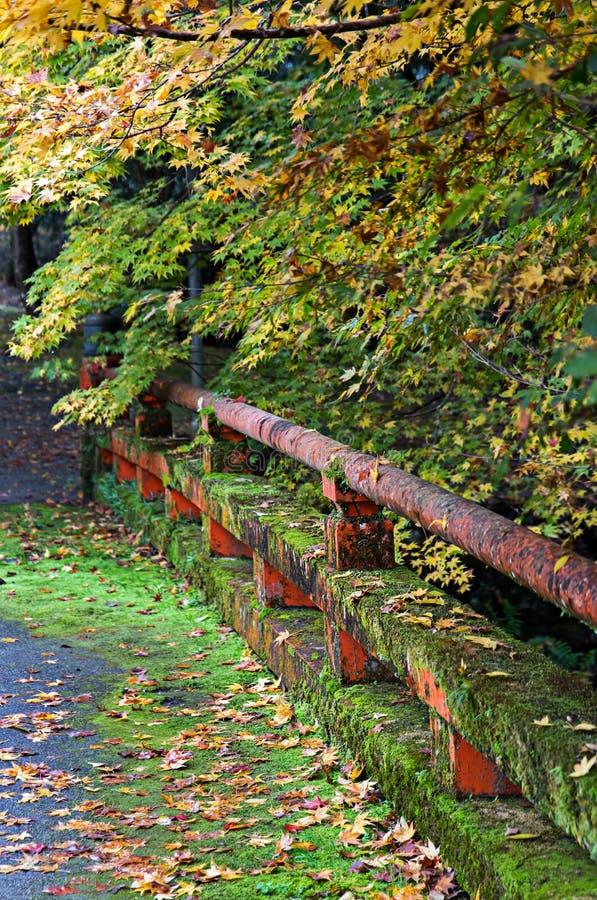 Un'inferriata muscosa su un ponte in natura di autunno immagine stock