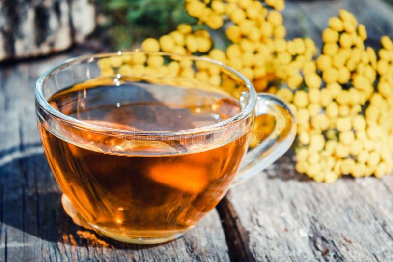 Un'infusione di tanica in una tazza di vetro su un tavolo di legno Tè di Tansy Herbal Erbe guaritrici fotografia stock
