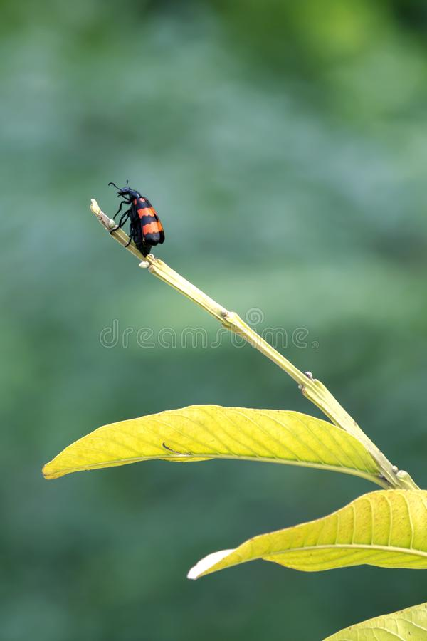 Un insecte sur un arbre image stock