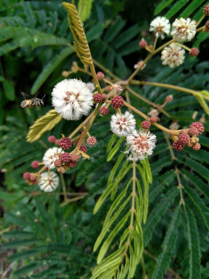 Un insecte sur la fleur photo libre de droits