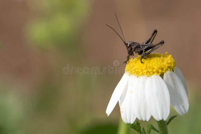 Un insecte sur une fleur photos stock