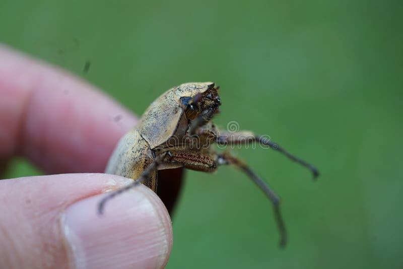 Un insecto de muerte foto de archivo