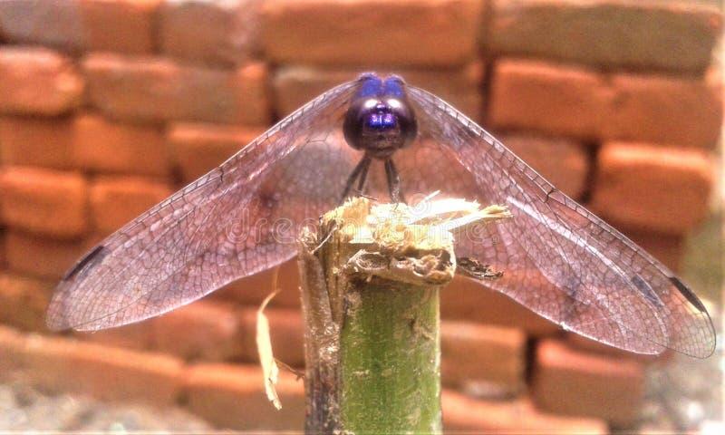 Un insecto hermoso que se sienta en la vista delantera del tronco foto de archivo libre de regalías