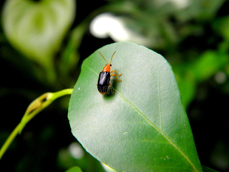 Un insecto que se sienta en una hoja imágenes de archivo libres de regalías
