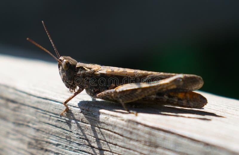 Un insetto che riposa su un pezzo di legno fotografia stock libera da diritti