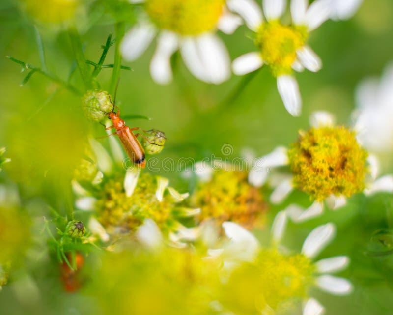 Un insetto sulla foglia fotografie stock